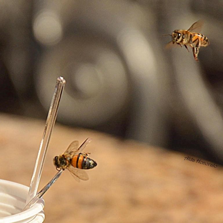 Operárias do mel